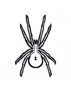 Pavúk svietiaci v tme -...