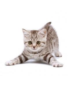 Murované mačiatko -...